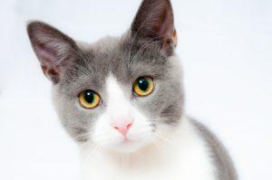 Macska kiegészítőkkel